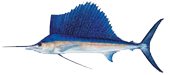 Miami Sailfish