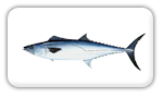 Kingfish Fishing