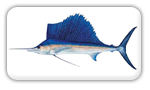 fish-sailfish